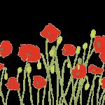Poppies - Annie Bailey