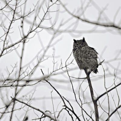 Owl - Sourdough Trail by Stephen Durbin