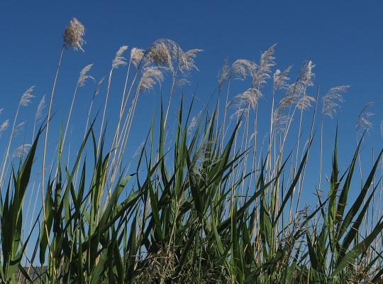 Montana Grass-Tim Crawford
