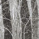 Sourdough Trail #7 by Stephen Durbin